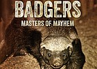 Documentary Discussions: The Honey Badgers