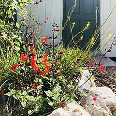 Free Water Wise Gardening Workshop