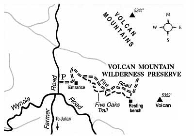 Check Out The Leafy New Five Oaks Trail On Volcan Mountain Near