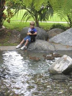 Bahia Resort duck pond
