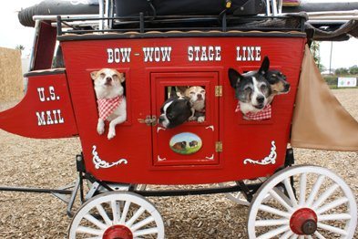 The Fido 500 Mini-Dog Races: Located on the Sparkletts Infield, these tiny dogs have big hearts and love to race. Complete with nine breeds and all weighing less than 15 pounds, these pups are sure to steal a few hearts along the way. Show times are 1 p.m., 4 p.m. and 7 p.m.