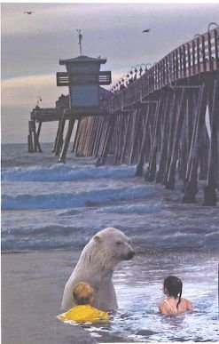Global Warming Impacts Imperial Beach! Wayward polar bear rides ice flow to Imperial Beach!