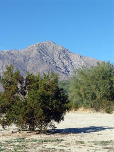 Borrego Springs is 780 feet above sea level.