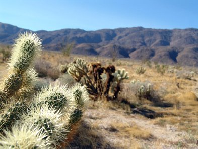 Borrego Springs is located 78 miles northeast of San Diego in