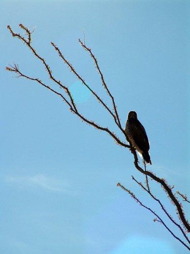 Bird watching in Borrego Springs.