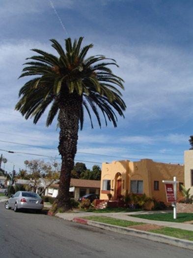 Craftsman homes, palm trees, and great weather in University Heights.