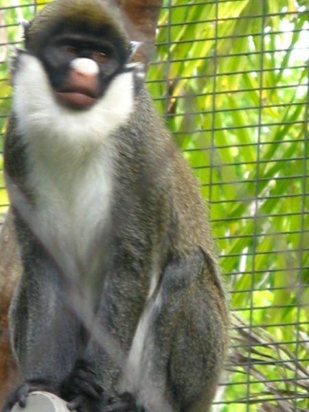 San Diego Zoo photo