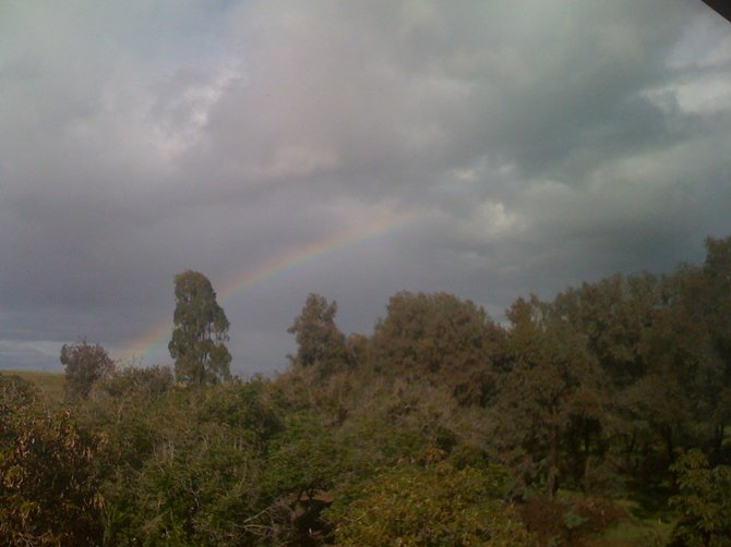 Rainbow appears over the Heald Avocado Grove in Bonsall.