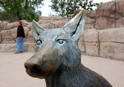 "Life-size sculpture of a coyote at the amphitheater in Mission Trails Regional Park, 1 Fr. Junipero Serra Trail, off Mission Gorge Road. It is one of a half dozen animal sculptures created by El Cajon artist Robert Berry. The park, which preserves 5760 acres as they were before Cabrillo arrived in 1542, is called the city's ""third jewel,"" after Balboa Park and Mission Bay."