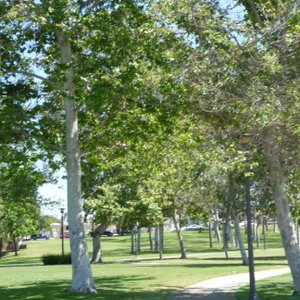 The huge park surrounding the James Beckwourth Library.
