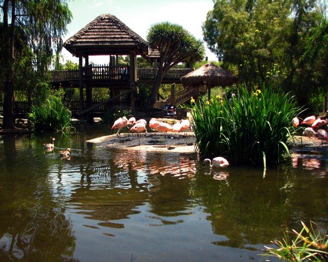 The Chilean Flamingo Lagoon, Wild animal Park, Escondido, CA