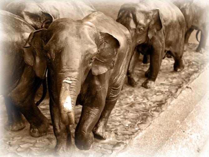 Elephants at the Wild Animal Park