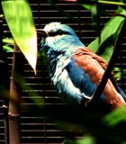 One of the birds in the Aviary at the Wild Animal Park in Escondido.