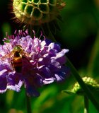 A bee on a flower I took at the Wild Animal park.