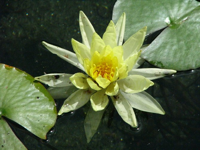 At the lily pond.
