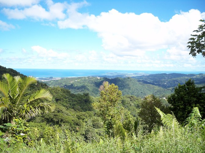 El Yunque, Puerto Rico: A panoramic view looking eastward from atop the mountain in El Yunqye National Rain Forest on the island of Puerto Rico