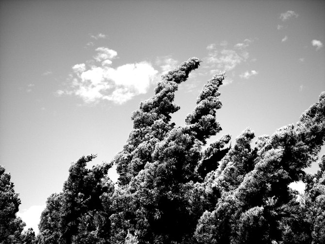 I was walking down 30th street in North Park and saw this striking scene, the rough texture of the bush is a nice contrast to the velvety sky.
