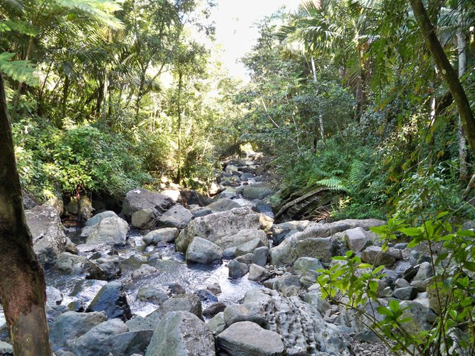 A stone filled river running through the middle of El Yunque National Rain Forest in Puerto Rico.