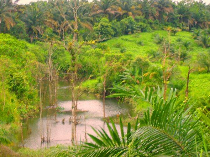 Amazon Rain Forest in Ecuador