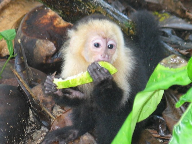 Cano Islands Area, Costa Rica: 