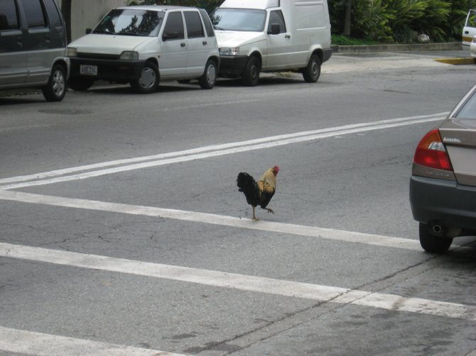 Only in Venezuela!!