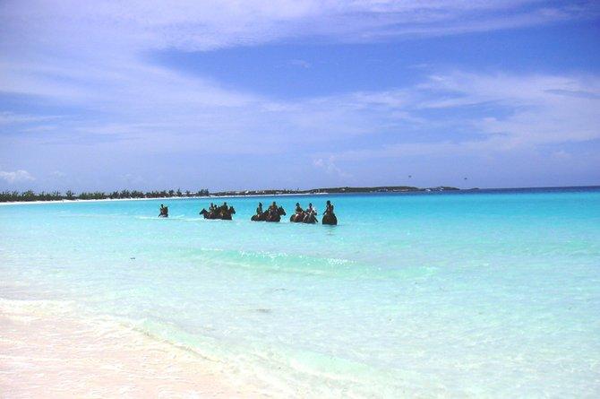 Sea horses in the Bahamas.