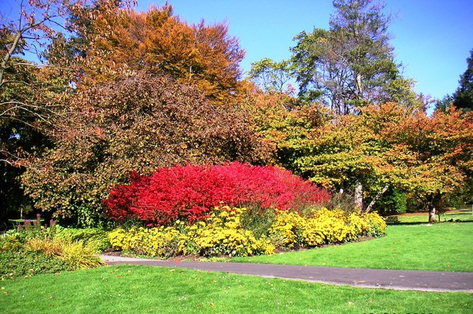 Vibrant foliages - beautiful creation of nature in Vancouver