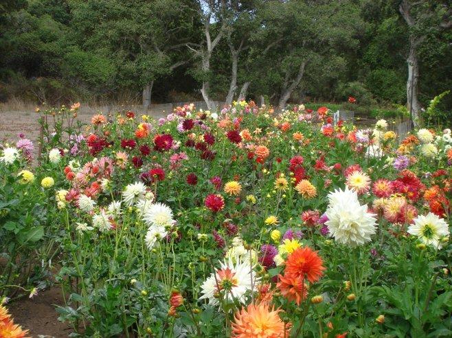 The Garden Song in Elkhorn, California   San Diego Reader