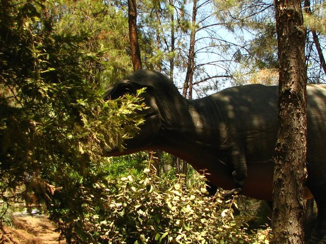 This was taken at the animal park during the dino exhibit