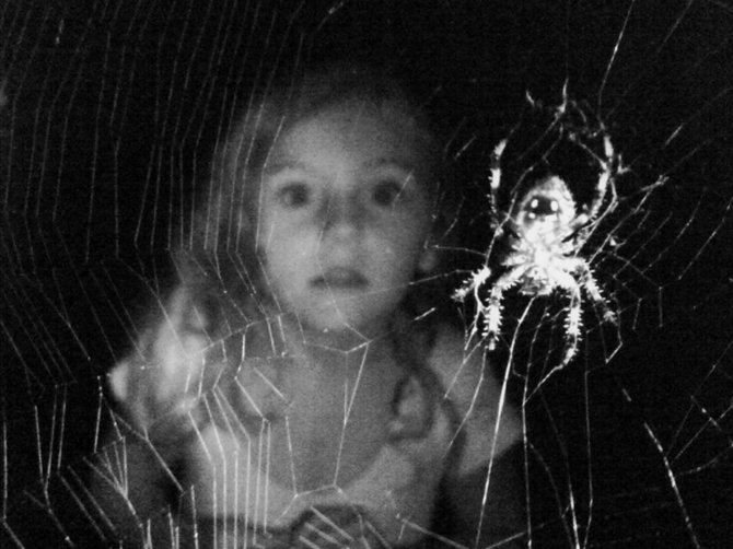I don't like bugs, and spiders really creep me out.  My daughter on the other hand, just loves them.  This photo was a fun, but a surprising accident.  Every evening around dusk, our spiders rebuild their webs for the evening, and we often visit, and feed (moths, flies, etc...) our creepy friends.  On this night i decided to take a picture. When the flash lit up, and i looked in the Lcd screen of the phone, well - this is what we got.
