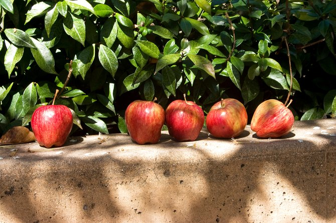This was really random! I was on a photo shoot in Balboa Park and came across these apples all lined up. I couldn't resist the shot
