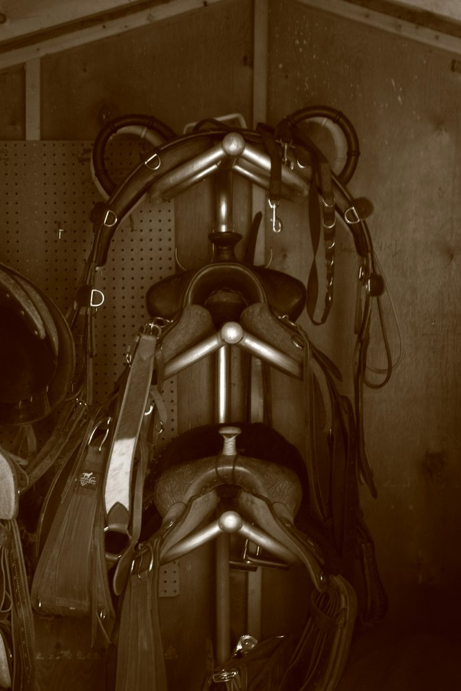 Saddles in a tack shed