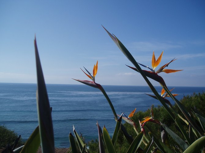 These bird of paradise plants frame the view toward the ocean from the top of the meditation garden at the Self Realization Fellowship Temple and Retreat in Encinitas.