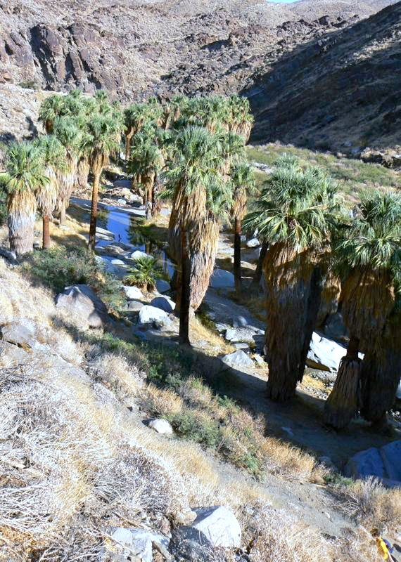 Palm Canyon, Indian Canyons, Palm Springs, CA