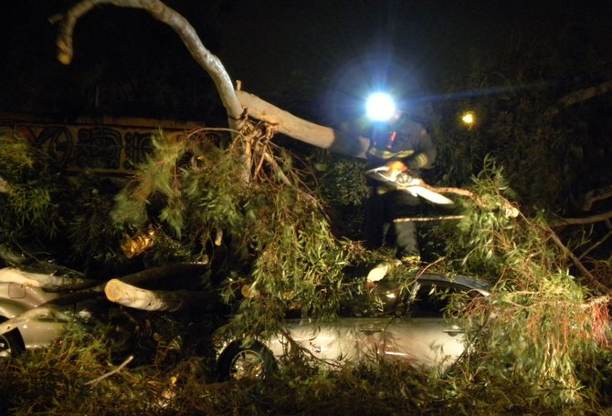 This photo was taken on December 7, 2009 in front of Centro Cultural de la Raza. A tree fell on top of the two parked vehicles.