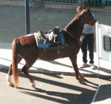 This was taken from my patio on Christmas Day.  I had not seen a horse on 9th before!