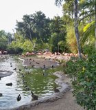The flamingo lagoon at the San Diego Zoo