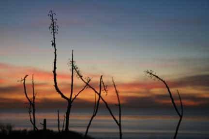 Sunset Cliffs. Beautiful!