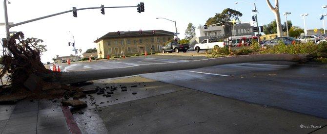 A tree fell on El Cajon Boulevard blocking traffic
