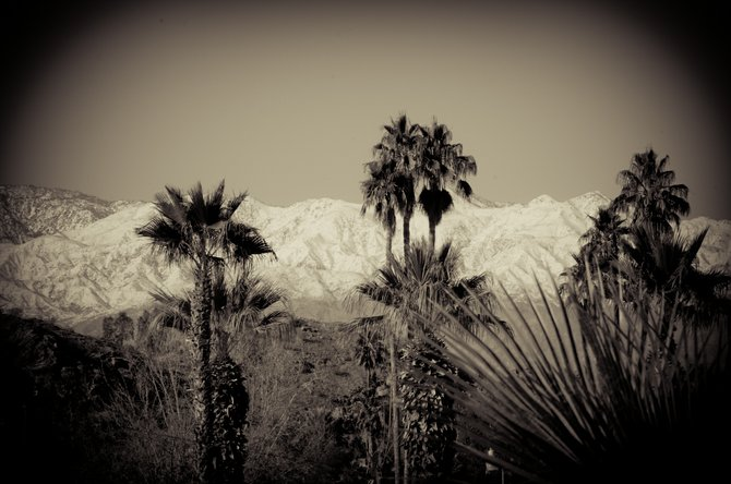 Took the road to Palm Springs to get some of the snow this winter, beautiful in the background snow covered mountains with palm trees gathering in the front of the picture, moved by a light warm wind.