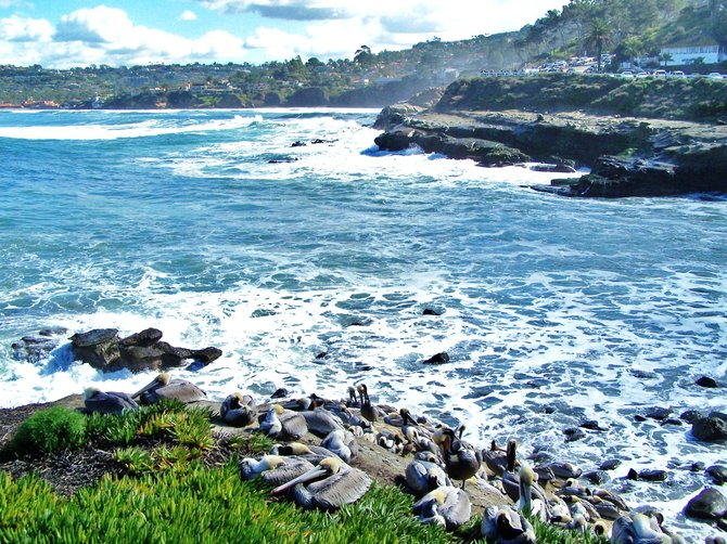 It was last week when the surf was up! i took this photo with a point and shoot 10x digital camera at the La Jolla cove.