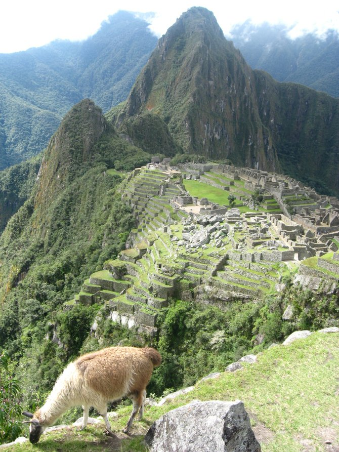 The proverbial llama overlooking the majestic Machu Pichu.