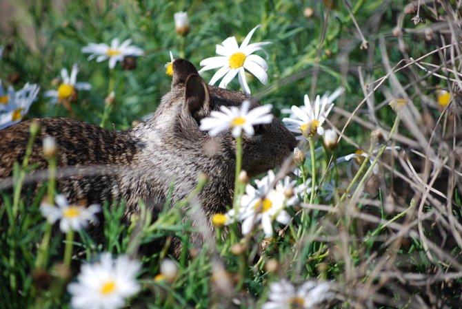 Wild life in La jolla