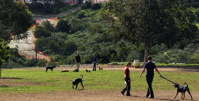 Dog Park in Morley field
