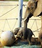 Baby elephant at the Wild Animal Park.