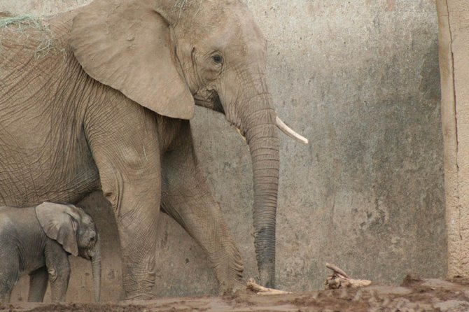 This baby elephant was born on February 14, 2010. It wouldn't leave its mother's side for more than two minutes. It still walks a little bit wobbly. A beautiful sight.
