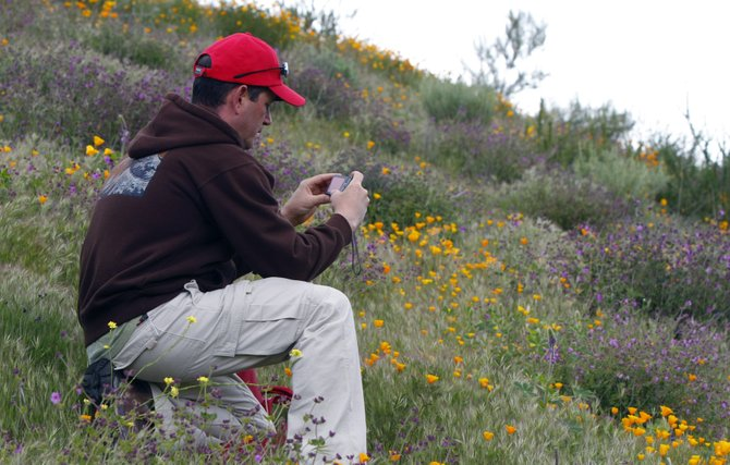 A photographer enjoys the wildflowers in bloom in Poway.