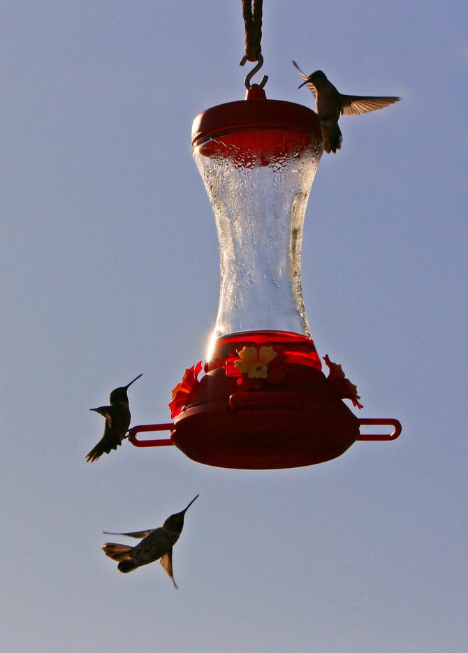 A popular neighborhood watering hole for three thirsty hummers in Poway. Cheers!