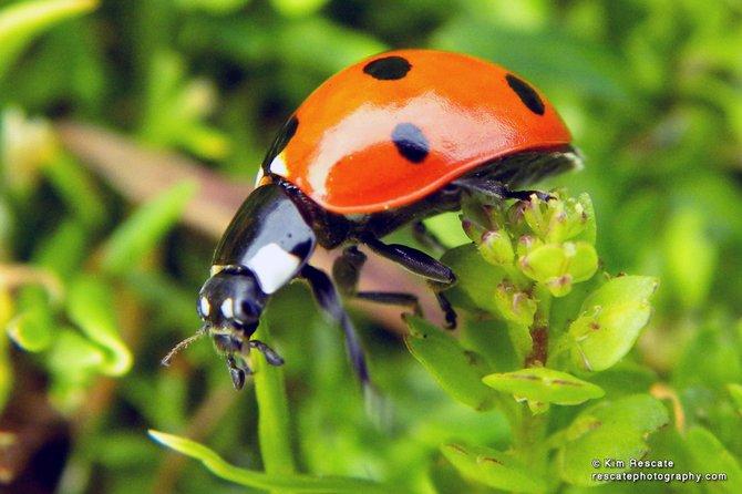Ladybug at Adams Avenue Park.