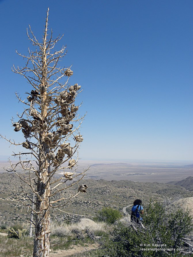 View of the Borrego Desert from the six-mile California Riding and Hiking Trail. Beautiful views and flowers along the way.